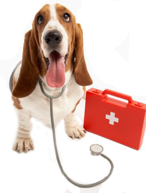 Ensure Good Health for Your Pets